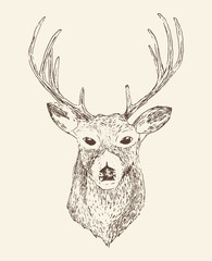 deer head engraving style, vintage illustration, hand drawn