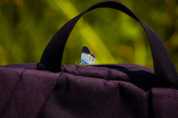 butterfly sits on a bag