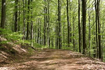 Waldweg im Mai