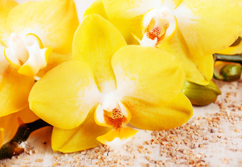 Beautiful yellow phalaenopsis orchids