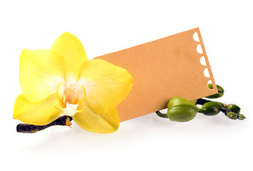 Yellow phalaenopsis orchid with a gift label