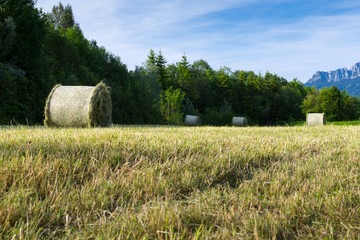 several hay bale at fresh mowed meadow in rural alp scene