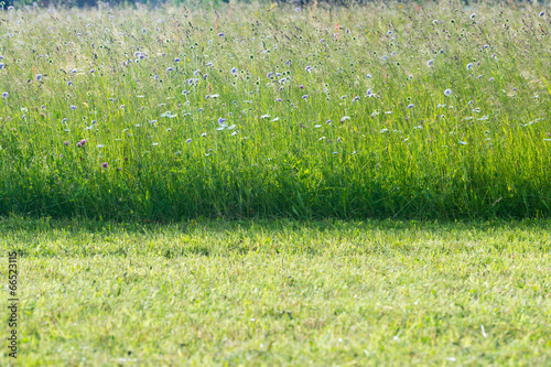flower meadow in spring time with fresh mowed grass in front