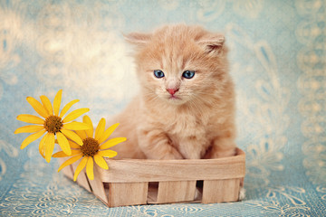 A cute little red kitten on a blue background.