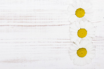 daisy flowers on white wooden background