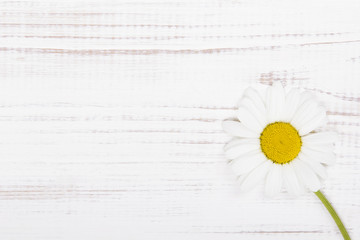 daisy flower on white wooden background
