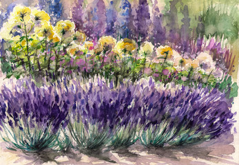 Lavender in garden.Watercolors