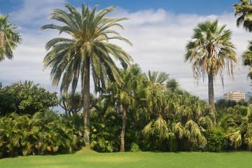 Palm garden in Puerto de la Cruz, Tenerife