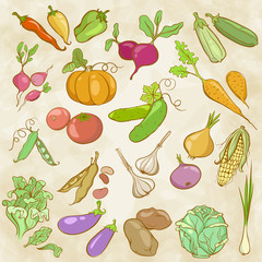 Drawing Colored Contours of Vegetables