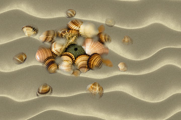 Sea Shells at beach