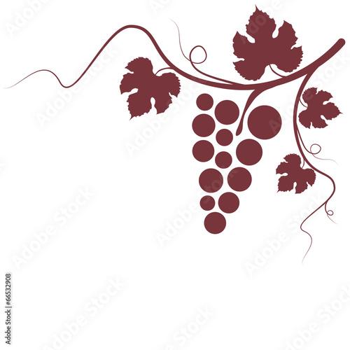 Weinrebe Rotwein