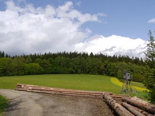 Landschaft mit Wiesen und Wald