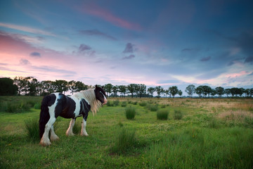 horse on pasture at sunset