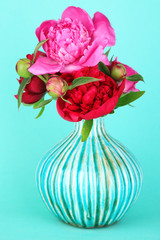 Beautiful pink peonies on blue background