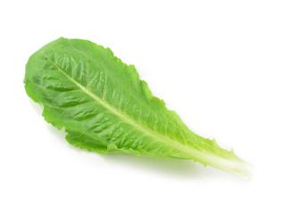Cos Lettuce isolate on White Background