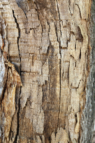 canvas print picture Tree bark texture background