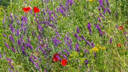 Wild flowers om the side of the road