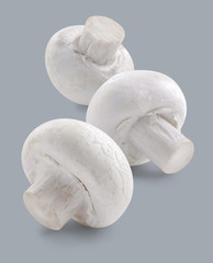 Three white button mushrooms isolated on grey background