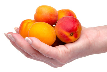 Woman's hand holding apricots