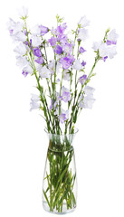 bouquet of campanula bellflower in glass vase