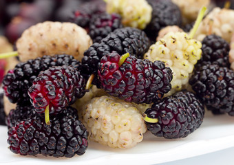 Black and white mulberry