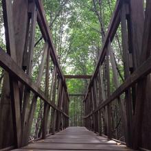 Pont de bois dans la forêt