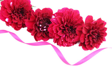 Dahlia flowers with ribbon, isolated on white