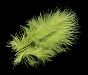 Bright feather on black background