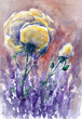 Rose and lavender.Watercolors