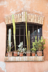 Succulents and window