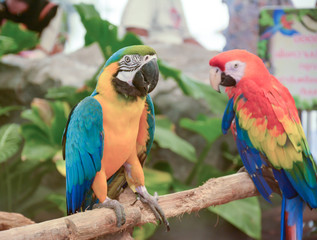 colorful Macaw in Pantanal