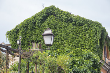 Ivy's house