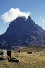 Cheval  Comtois, Pic d'Ossau , Parc national des Pyrénées