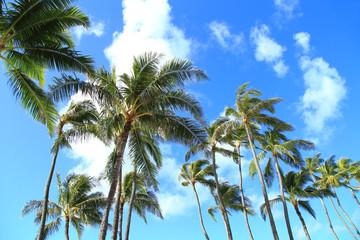 ハワイのヤシの木と青空