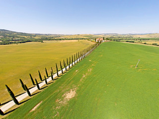 Tuscany cypresses  from sky view