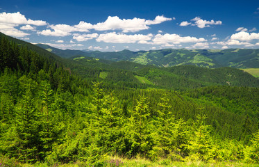 Forest on the hills. Beautiful summer landscape