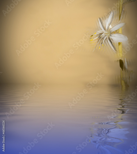 canvas print picture flower reflected on water
