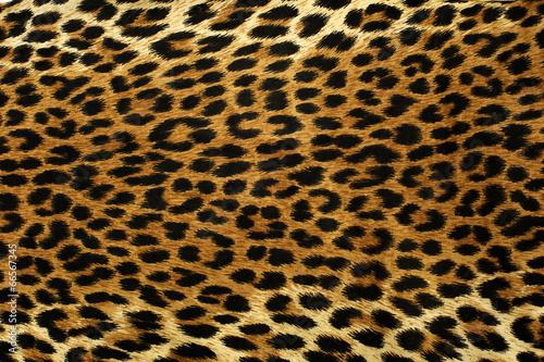 Foto op Canvas Luipaard Leopard Spots