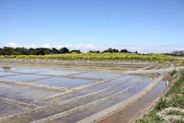 salzgarten auf der île de ré