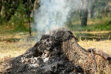 stump fired smoke a deforest in Thailand plate behide