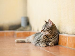 Cat lying on a terrace