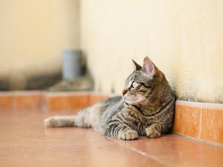 Cat lying on a terrace