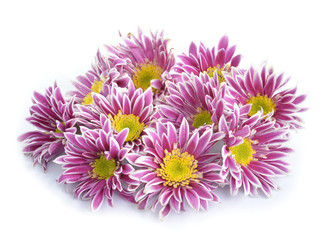 chrysanthemum flower isolate on white background