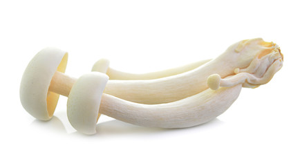 White beech mushrooms, Shimeji mushroom, Edible mushroom isolate