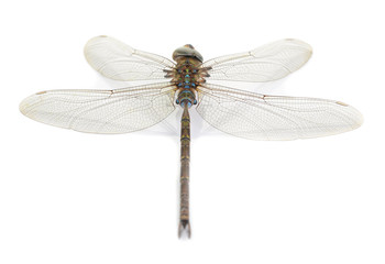Dragonfly isolate on white background