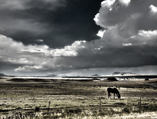 Horse grazing with thunderheads