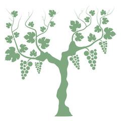 Weinstock Weißwein