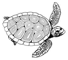 coloring book turtle