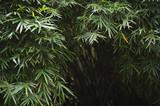 Dark Tropical Jungle Bamboo Background