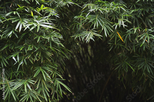 Poster Bamboe Dark Tropical Jungle Bamboo Background
